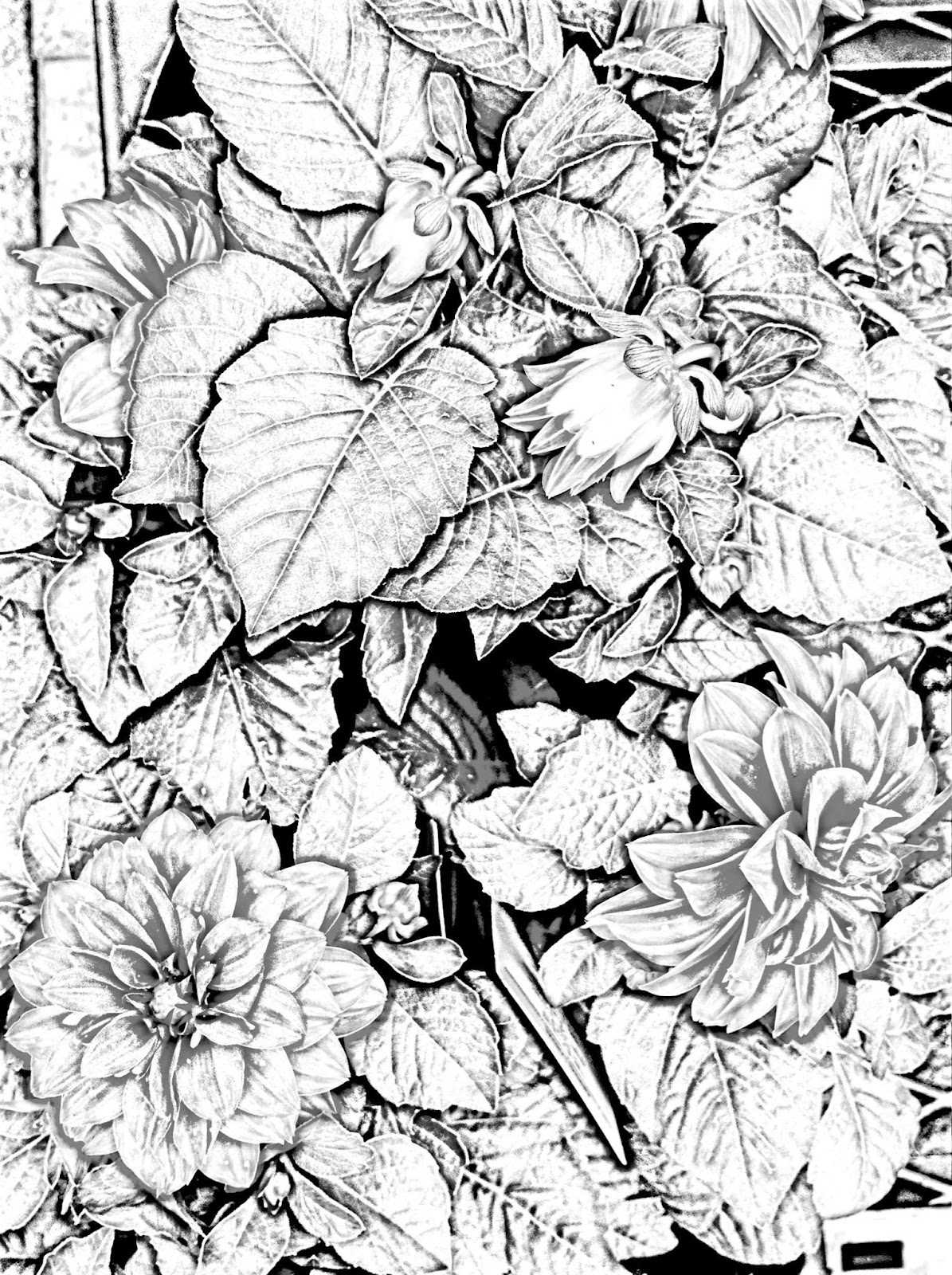 Birds, flowers and Landscapes free printable coloring pages for ...